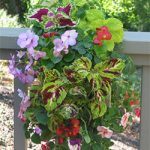 Mixed Shady Annual Vertical Garden
