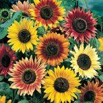 Sunflower Seed Mat