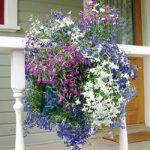 Mixed Lobelia Vertical Garden