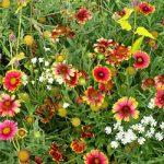 Xeriscape – Eastern U.S. Mix Bulk Seed – 1 pound