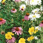 Wildflower Shade Mix Bulk Seed – 1 pound