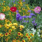 Dry Garden Mix Bulk Seed – 1 pound