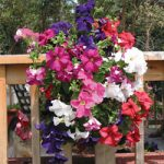 Mixed Petunia Vertical Garden