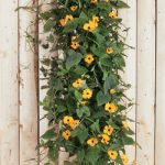 Black-Eyed Susan Vertical Garden