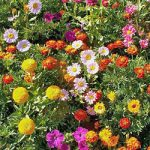 Border Seed Mix Bulk Seed – 1 pound