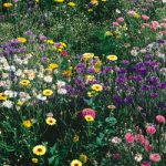 Wildflowers Seed Mix Bulk Seed – 1 pound