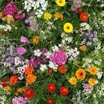 Fragrant Flower Mix Bulk Seed – 1 pound
