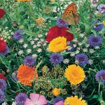 Hummingbird and Butterfly Mix Bulk Seed – 1 pound