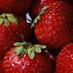 Ozark Beauty Everbearer Strawberry Plants – 10 root divisions