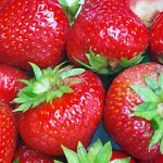 Eclair Junebearer Strawberry Plants – 10 root divisions