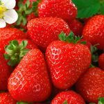 Seascape Everbearer Strawberry Plants – 10 root divisions