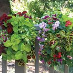 Shade Loving Vertical Garden Kit