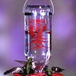 Hummingbird Feeder – 32 oz