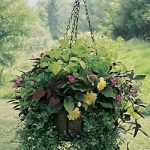 Medium Hanging Garden Classic with Liner