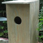 American Kestrel / Screech Owl Nest Box