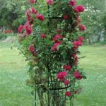 Rose Pillar Obelisk – Large