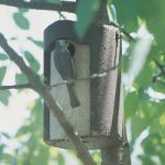 Tree Trunk Birdhouse – 1 1/4″